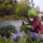 Kermit Watering Plants meme