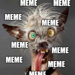 World's Ugliest Dog Contest | Know Your Meme |What Ugly Dog Meme