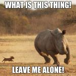 animals | WHAT IS THIS THING! LEAVE ME ALONE! | image tagged in animals | made w/ Imgflip meme maker