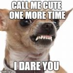Angry chihuahua  | CALL ME CUTE ONE MORE TIME I DARE YOU | image tagged in angry chihuahua  | made w/ Imgflip meme maker