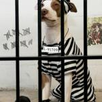 Dog In Prison meme
