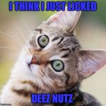 Random Cat | I THINK I JUST LICKED DEEZ NUTZ | image tagged in random cat | made w/ Imgflip meme maker