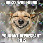 Stoner Dog Meme | GUESS WHO FOUND YOUR ANTIDEPRESSANT PILLS | image tagged in memes,stoner dog | made w/ Imgflip meme maker