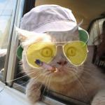 Fear And Loathing Cat