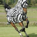 Horse In Zebra Suit meme