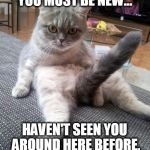 Sexy Cat Meme | YOU MUST BE NEW... HAVEN'T SEEN YOU AROUND HERE BEFORE. | image tagged in memes,sexy cat | made w/ Imgflip meme maker