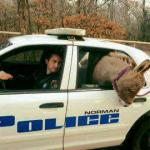 Donkey in Police Car meme