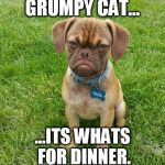 That's it, I'm calling you out Grumpy cat. | GRUMPY CAT... ...ITS WHATS FOR DINNER. | image tagged in grumpy dog,memes,animals,funny,dog,grumpy cat | made w/ Imgflip meme maker