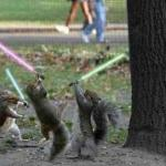 Squirrels With Light Sabers meme