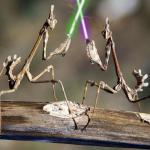 Mantis With Lightsabers meme