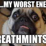 Pug worried | NO...MY WORST ENEMY BREATHMINTS!!! | image tagged in pug worried | made w/ Imgflip meme maker