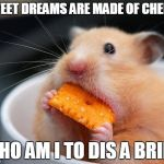 Cheese mouse | SWEET DREAMS ARE MADE OF CHEESE WHO AM I TO DIS A BRIE? | image tagged in cheese mouse | made w/ Imgflip meme maker