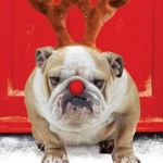 Christmas Hound | FLEAS NAVIDAD | image tagged in christmas hound,dog,christmas,meme,memes | made w/ Imgflip meme maker