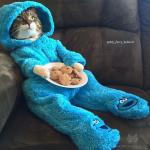 Cat in PJS meme