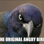 The Original Angry Bird | THE ORIGINAL ANGRY BIRD | image tagged in the original angry bird,angry bird,angry birds,grackle,birds,bird | made w/ Imgflip meme maker