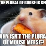 Cheese mouse | IF THE PLURAL OF GOOSE IS GEESE WHY ISN'T THE PLURAL OF MOUSE MEESE? | image tagged in cheese mouse | made w/ Imgflip meme maker