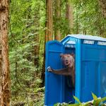 Outhouse Bear meme