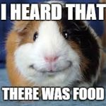 Guinea Pig | I HEARD THAT THERE WAS FOOD | image tagged in guinea pig | made w/ Imgflip meme maker
