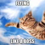 Flying-cat | FLYING LIKE A BOSS | image tagged in flying-cat | made w/ Imgflip meme maker