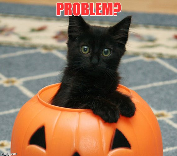 PROBLEM? | image tagged in cats,grumpy cat,funny memes,holidays,cute kittens | made w/ Imgflip meme maker