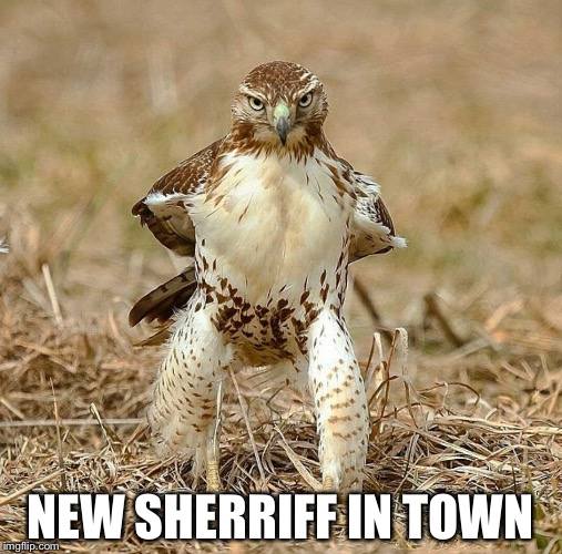 NEW SHERRIFF IN TOWN | image tagged in bird sherriff | made w/ Imgflip meme maker