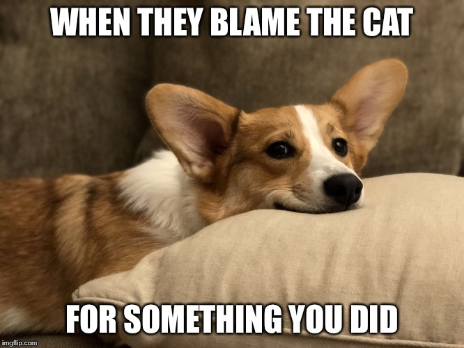 WHEN THEY BLAME THE CAT FOR SOMETHING YOU DID | image tagged in ratchet smirk | made w/ Imgflip meme maker