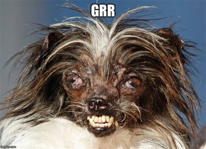 ugly dog | GRR | image tagged in ugly dog | made w/ Imgflip meme maker