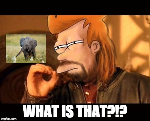 One Does Not Simply Futurama Fry | WHAT IS THAT?!? | image tagged in one does not simply futurama fry | made w/ Imgflip meme maker