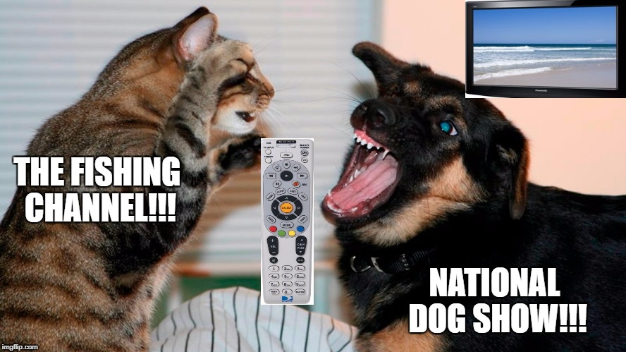 Battle for the remote. | THE FISHING CHANNEL!!! NATIONAL DOG SHOW!!! | image tagged in memes,dogs an cats,lol | made w/ Imgflip meme maker