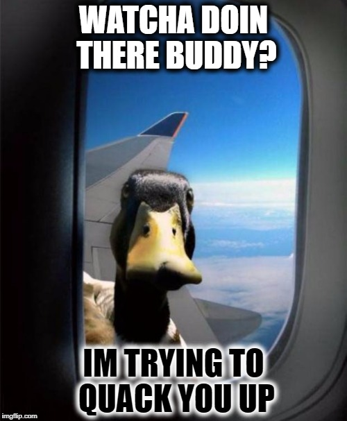 How is this possible.. | WATCHA DOIN THERE BUDDY? IM TRYING TO QUACK YOU UP | image tagged in duck on plane wing,duck,airplane,bad pun,kms | made w/ Imgflip meme maker