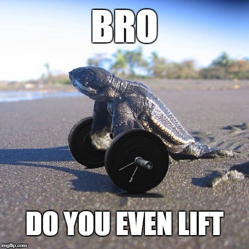 Do You Even Lift | BRO DO YOU EVEN LIFT | image tagged in bro,do you even lift,scarborough,uk,turtle power | made w/ Imgflip meme maker