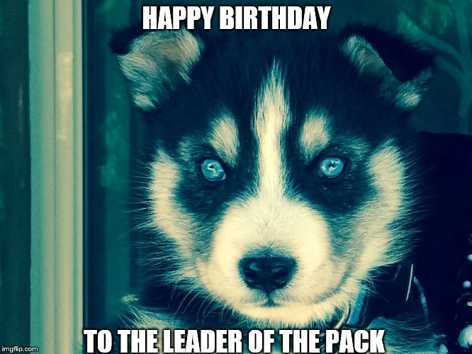 Happy birthday | HAPPY BIRTHDAY TO THE LEADER OF THE PACK | image tagged in wolf,sam elliot happy birthday | made w/ Imgflip meme maker