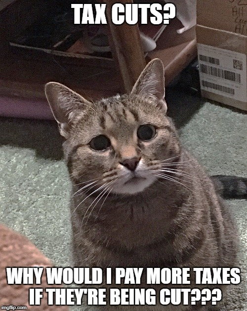 tax cuts | TAX CUTS? WHY WOULD I PAY MORE TAXES IF THEY'RE BEING CUT??? | image tagged in worried cat tax cuts | made w/ Imgflip meme maker