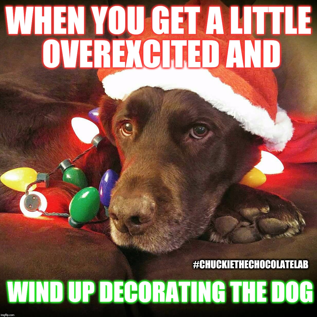 Decorating the dog  | WHEN YOU GET A LITTLE OVEREXCITED AND WIND UP DECORATING THE DOG #CHUCKIETHECHOCOLATELAB | image tagged in chuckie the chocolate lab teamchuckie,dogs,funny,christmas,holidays,christmas lights | made w/ Imgflip meme maker