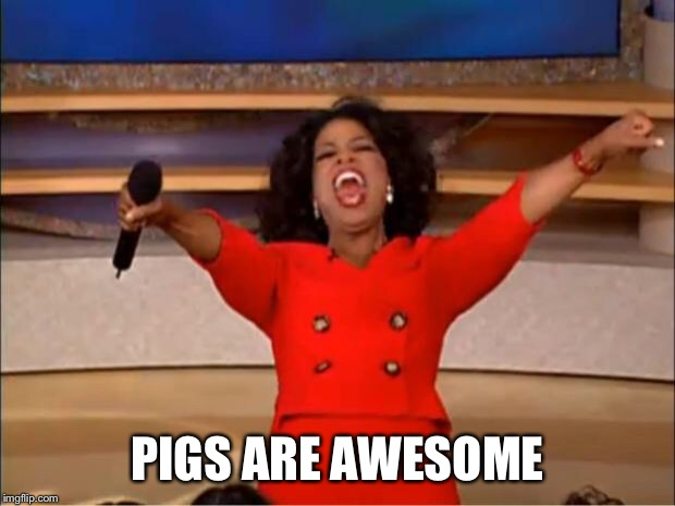 Oprah You Get A Meme | PIGS ARE AWESOME | image tagged in memes,oprah you get a | made w/ Imgflip meme maker