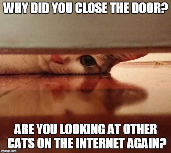 WHY DID YOU CLOSE THE DOOR? ARE YOU LOOKING AT OTHER CATS ON THE INTERNET AGAIN? | image tagged in AdviceAnimals | made w/ Imgflip meme maker