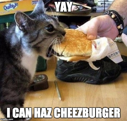 YAY I CAN HAZ CHEEZBURGER | image tagged in i haz cheezburger | made w/ Imgflip meme maker