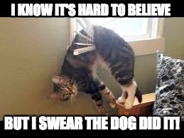 Dumb cat | I KNOW IT'S HARD TO BELIEVE BUT I SWEAR THE DOG DID IT! | image tagged in cat meme,oops,funny memes,memes,funny | made w/ Imgflip meme maker