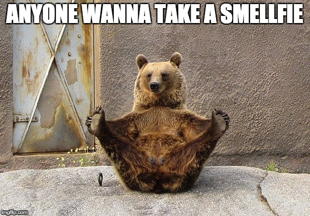 Wanna Smellfie | ANYONE WANNA TAKE A SMELLFIE | image tagged in smellfie,bear,funny memes,funny | made w/ Imgflip meme maker