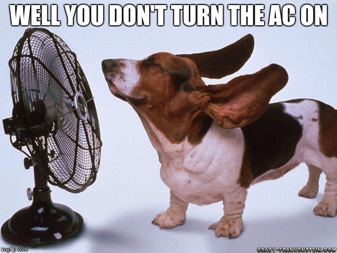 Hot Dog | WELL YOU DON'T TURN THE AC ON | image tagged in fan dog,hot,summer | made w/ Imgflip meme maker