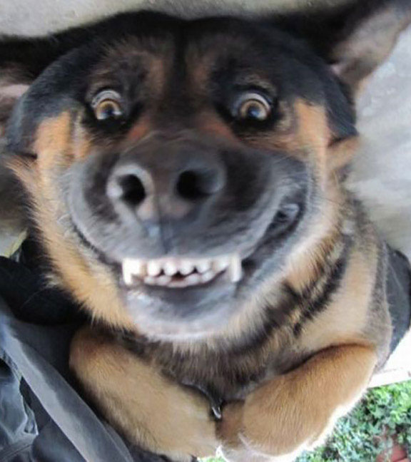 Funny dog face blank template imgflip high quality funny dog face blank meme template voltagebd Gallery