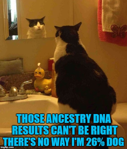 DNA results...are YOU scared of what you might find? | THOSE ANCESTRY DNA RESULTS CAN'T BE RIGHT THERE'S NO WAY I'M 26% DOG | image tagged in worried cat,memes,dog vs cat,funny,cats,animals | made w/ Imgflip meme maker