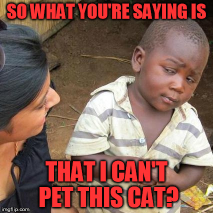 Third World Skeptical Kid Meme | SO WHAT YOU'RE SAYING IS THAT I CAN'T PET THIS CAT? | image tagged in memes,third world skeptical kid | made w/ Imgflip meme maker