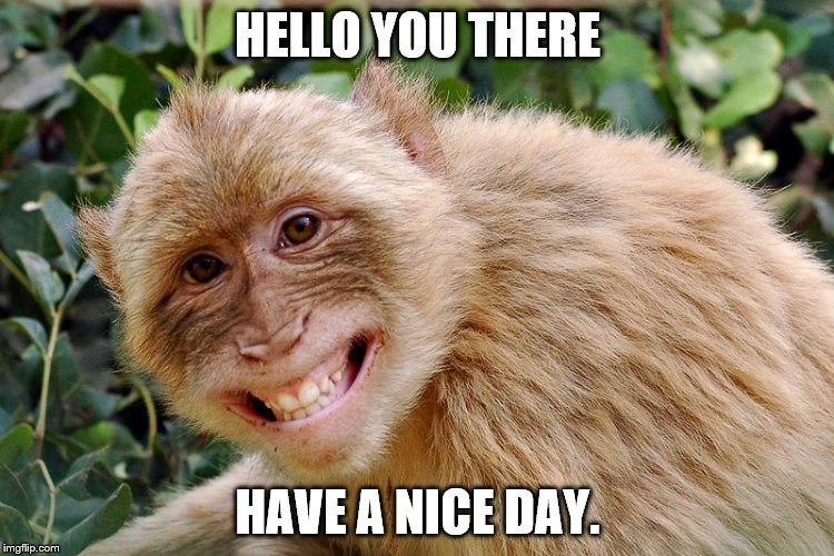 HELLO YOU THERE HAVE A NICE DAY. | image tagged in hello have a nice day | made w/ Imgflip meme maker