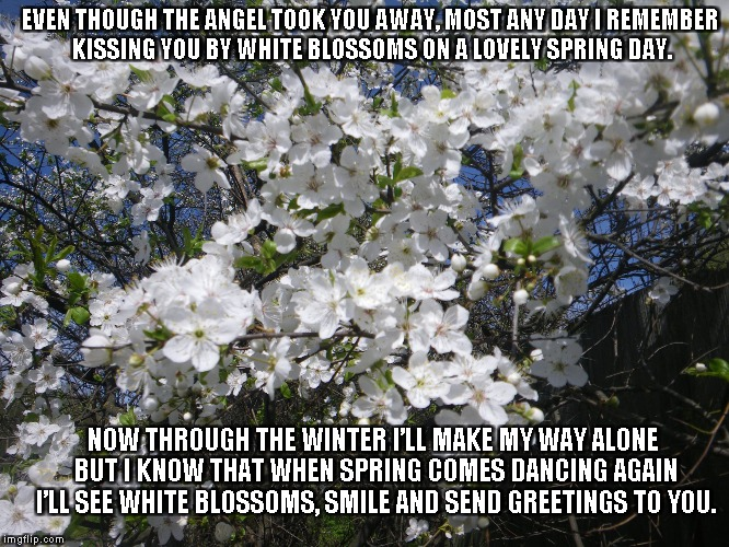 Remembering White Blossoms |  EVEN THOUGH THE ANGEL TOOK YOU AWAY, MOST ANY DAY I REMEMBER KISSING YOU BY WHITE BLOSSOMS ON A LOVELY SPRING DAY. NOW THROUGH THE WINTER I'LL MAKE MY WAY ALONE BUT I KNOW THAT WHEN SPRING COMES DANCING AGAIN I'LL SEE WHITE BLOSSOMS, SMILE AND SEND GREETINGS TO YOU. | image tagged in angels,white blossoms,spring,winter,smiles,dancing | made w/ Imgflip meme maker