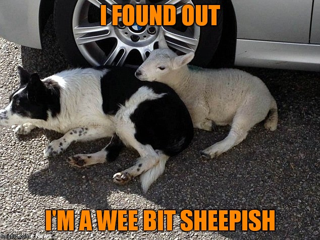 I FOUND OUT I'M A WEE BIT SHEEPISH | made w/ Imgflip meme maker