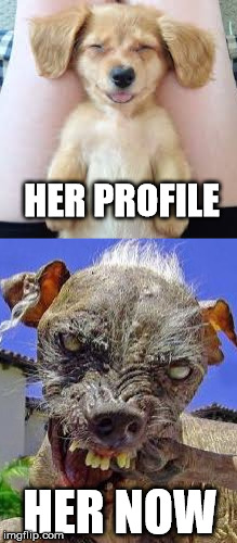 The dateing profile | HER PROFILE HER NOW | image tagged in memes,funny,dogs,animals,expectation vs reality,profile | made w/ Imgflip meme maker