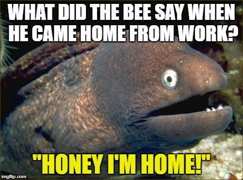 "Bad Joke Eel Meme | WHAT DID THE BEE SAY WHEN HE CAME HOME FROM WORK? ""HONEY I'M HOME!"" 