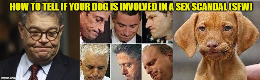 Dog in a Sex Scandal (SFW) | HOW TO TELL IF YOUR DOG IS INVOLVED IN A SEX SCANDAL (SFW) | image tagged in dogs,democrat,democrats,sexual harassment,pizzagate | made w/ Imgflip meme maker
