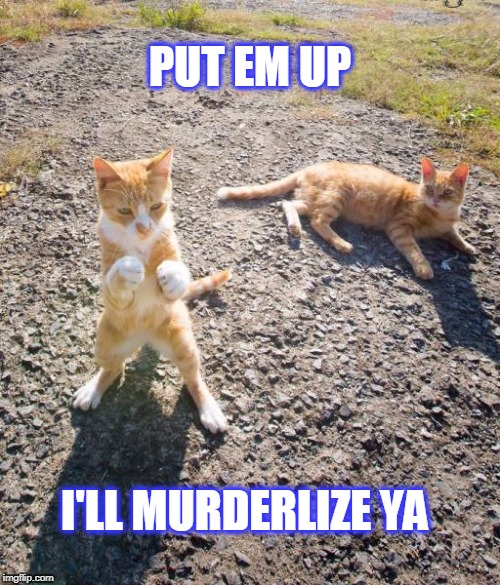 Cat Boxer | PUT EM UP I'LL MURDERLIZE YA | image tagged in put em up,cats,cat,boxing | made w/ Imgflip meme maker